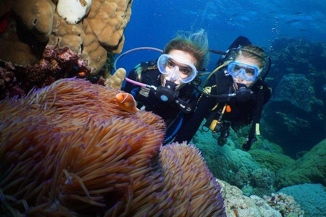 Quicksilver Dive 4 Day PADI Learn to Dive Course