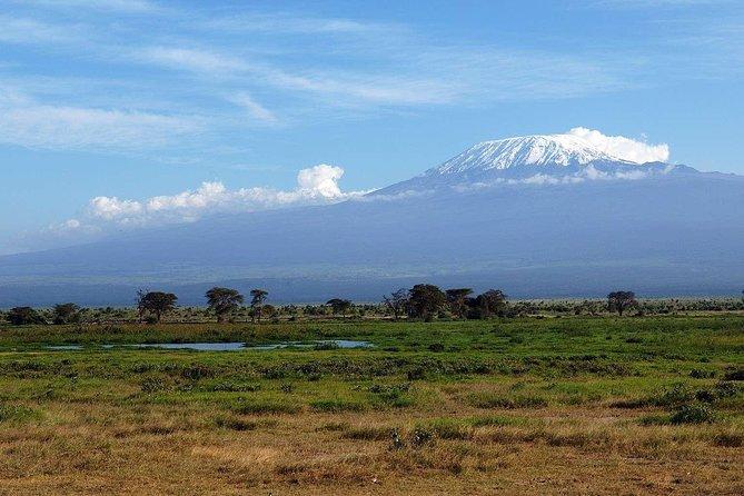 A Kenya Safari Highlights