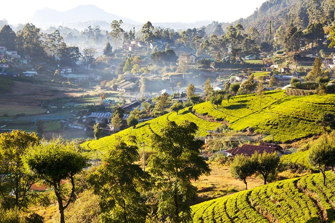 Nuwara Eliya from Kandy by Train (Private Day Tour) photo 9