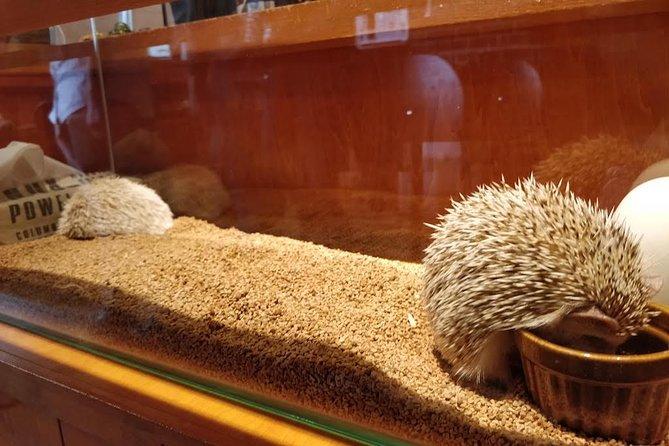 Admission to Hedgehog Cafe in Harajuku
