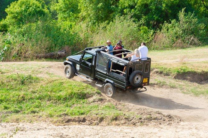 Minneriya National Park Shared Safari