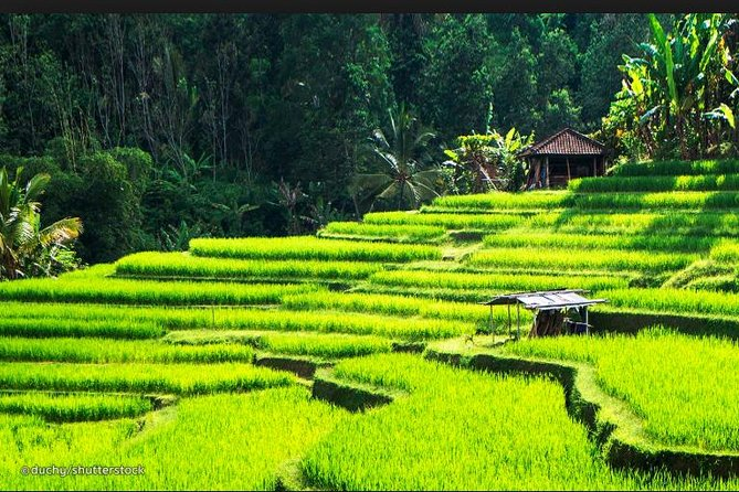 Tour Ubud: The Sacred Monkey Forest, Jungle Swing, Cepung Waterfall, More