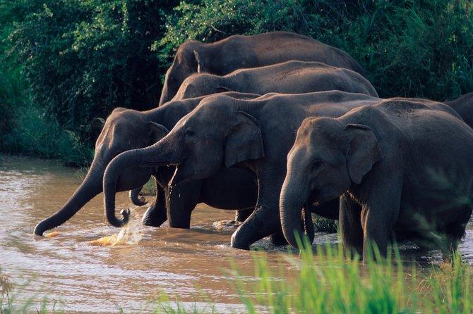 Wasgamuwa National Park Entrance Ticket