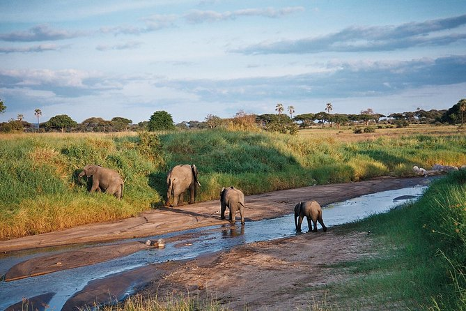 5 Days Tanzania Safari- Tarangire Np, Serengeti Np and Ngorongoro Crater