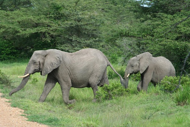 5 Days Safari to Selous & Mikumi