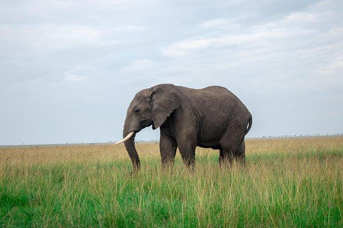 Kenya Tanzania 8 Days 7 Nights Standard Luxury Safari