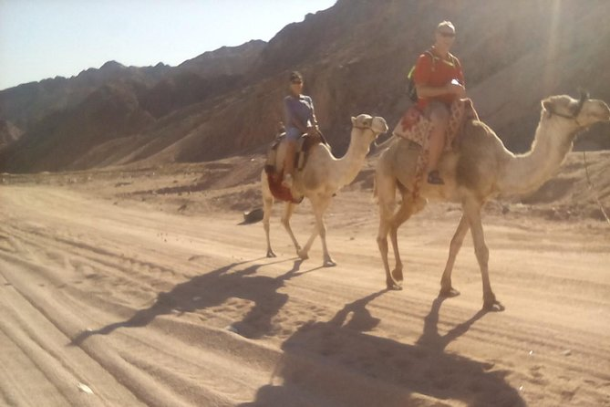 Camel riding in dahab