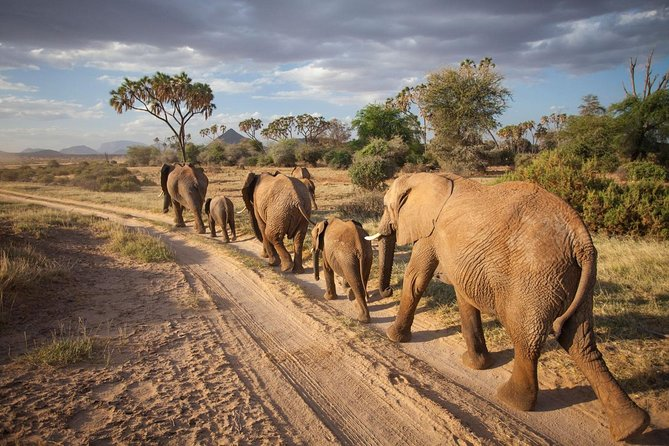 3-Day Samburu and Namunyak Conservation Game Drive and Camel Safari