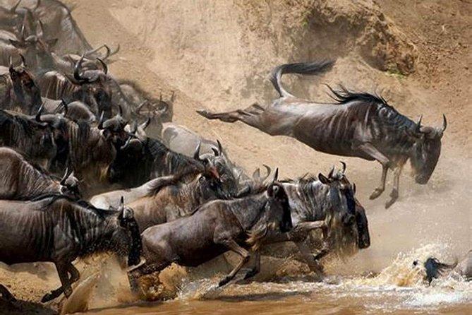 4 Days Joined Group Safari Serengeti,Ngorongoro and Tarangire National Parks