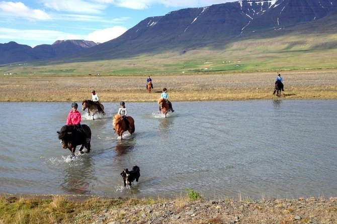 Horse Riding Tour to the Glacier River Delta with Waterfall - 3 hours photo 7