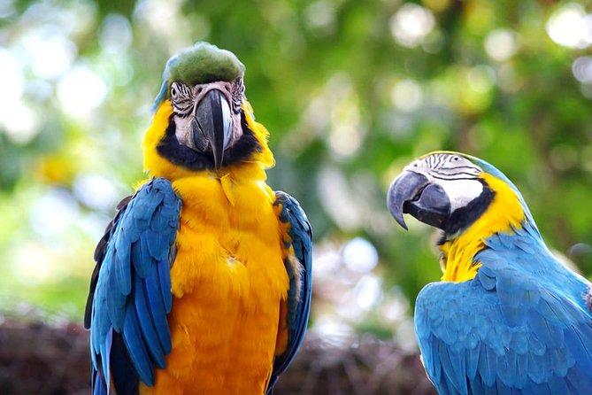 Wonderful Amazon: Nanay, Momon and Amazon River full day