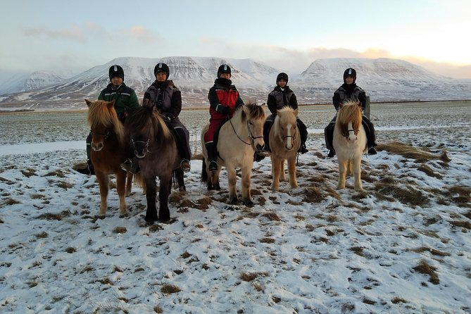 The Viking North Iceland Horse Riding in Winter Experience