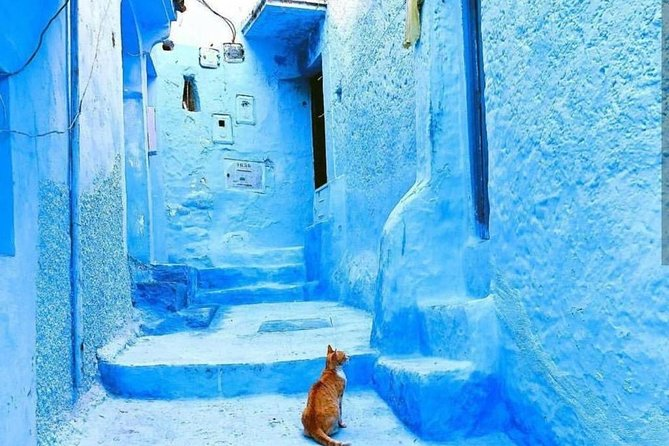 Day trip to Chefchaouen and the panoramic tour of Tangier photo 16