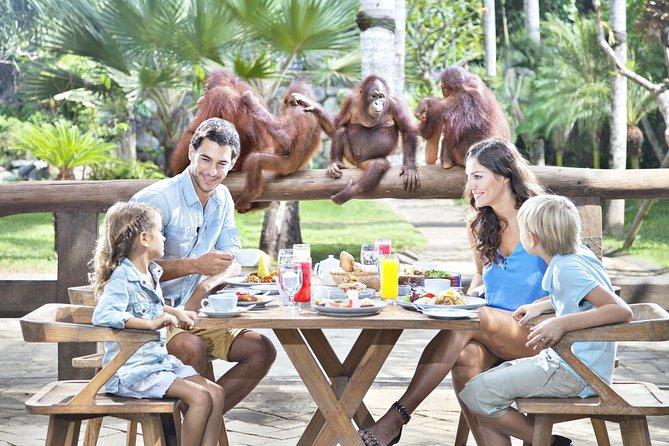 Enjoy Breakfast Experience with Orangutans at Bali Zoo