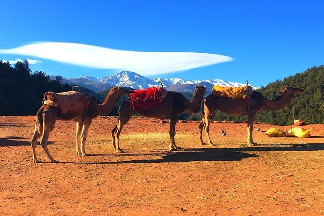 Atlas Mountains Day trips & 3 valleys with Camel ride photo 9