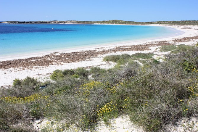 Full Day Guided Abrolhos Fly and Flipper Tour from Geraldton, Geraldton, AUSTRALIA