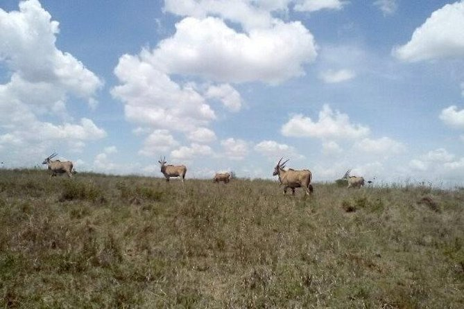 Nairobi excursions sight seeing experience