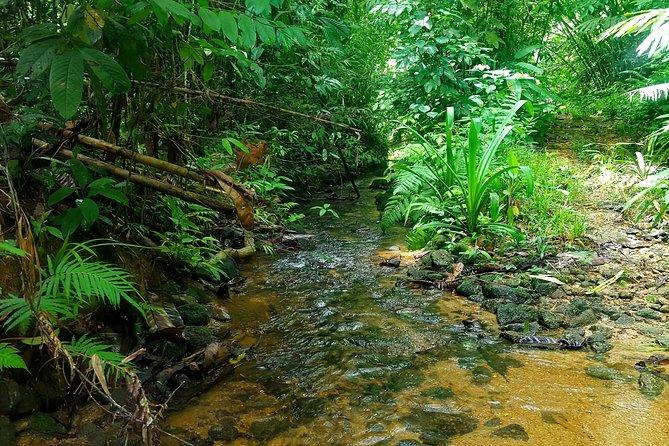 Trek through almost unexplored jungle.