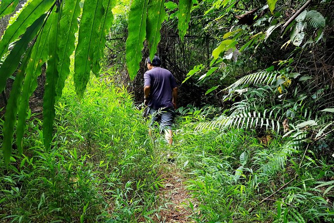 Khao Lak Jungle Experience