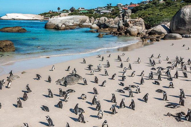 South Africa Cape Town, Cape Peninsula Full Day Tour