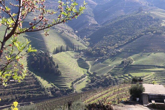 Douro Valley Premium Tour | IT WILL LEAVE YOU SPEECHLESS | Minimum 4 pax