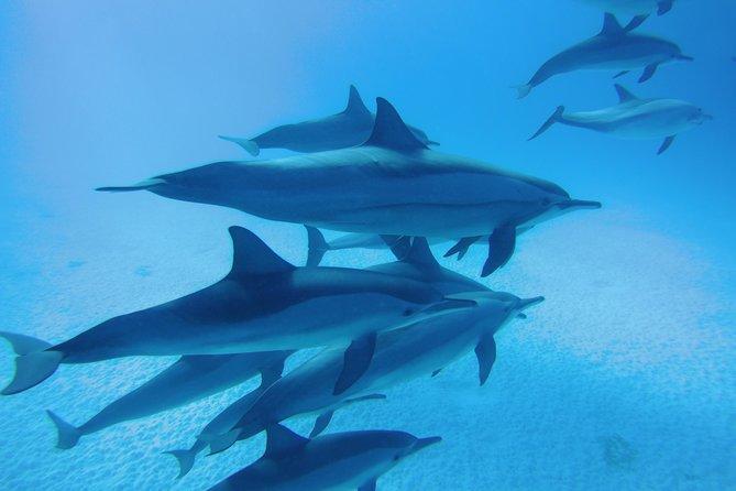 Dolphin House Satayeh Reef Snorkeling Sea Trip - Marsa Alam