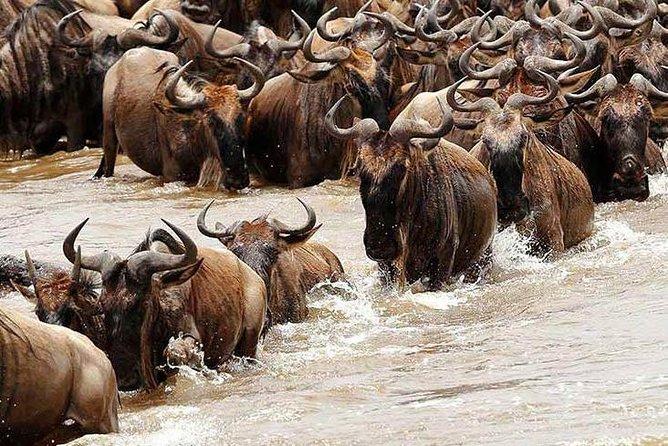 5 Day Private Camping Serengeti,Ngorongoro, lake Manyara,Tarangire National Park