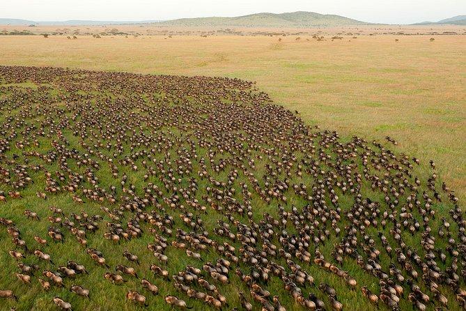 3 Day Private Safari in Serengeti and Lake Manyara National Park