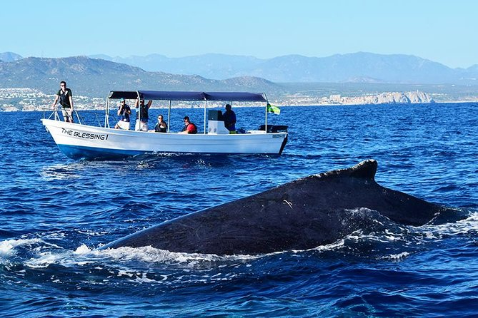 Cabo Private Whale Watching Tour