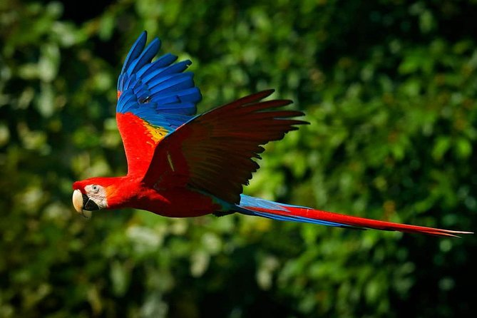 Tambopata Chuncho Macaw Clay Lick 3 Days photo 17