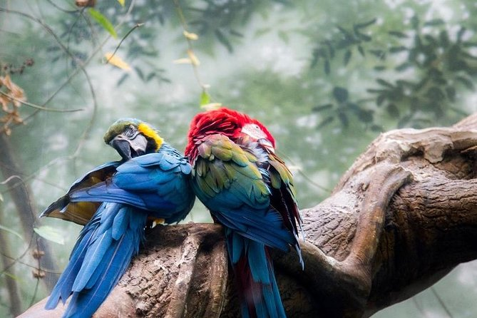 Tambopata Chuncho Macaw Clay Lick 3 Days photo 6