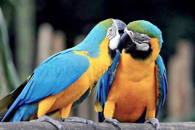 Tambopata Chuncho Macaw Clay Lick 3 Days photo 1