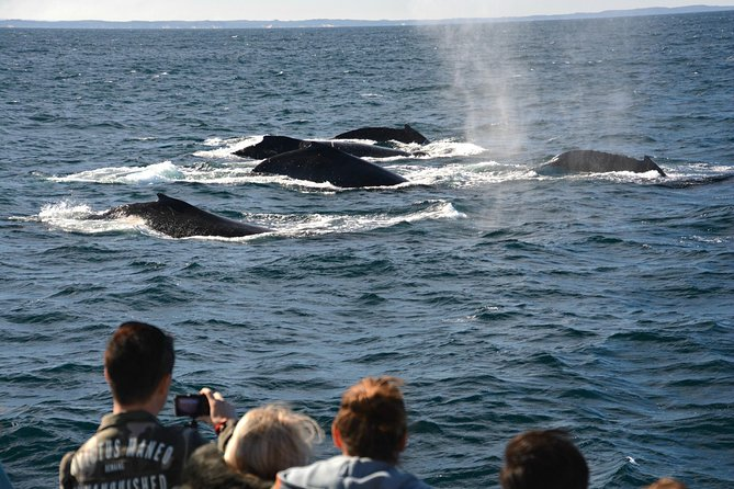 Whale-Watching Tour from Augusta or Perth with Optional Captain's Lounge Upgrade photo 8