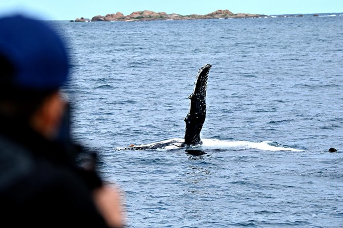 Whale-Watching Tour from Augusta or Perth with Optional Captain's Lounge Upgrade photo 10