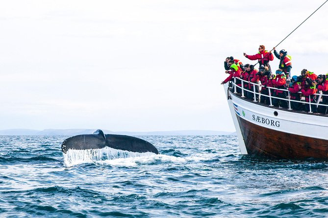 Cape Town, Private Whale Watching Tour Combo On The Boat