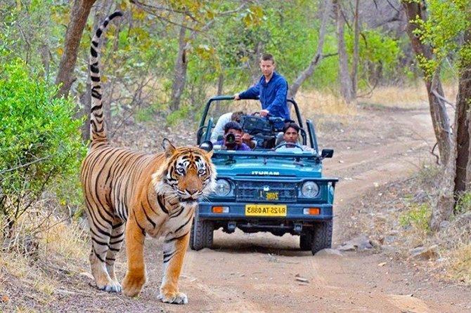 Ranthambore Wildlife Safari Tour From New Delhi