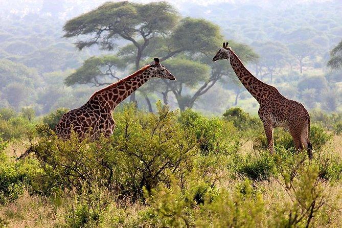 2 Days Tanzania Safari