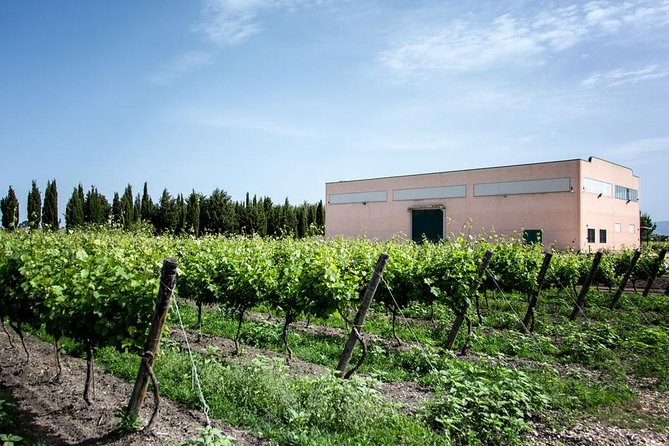 Tour of the winery with tasting of organic wines and typical products