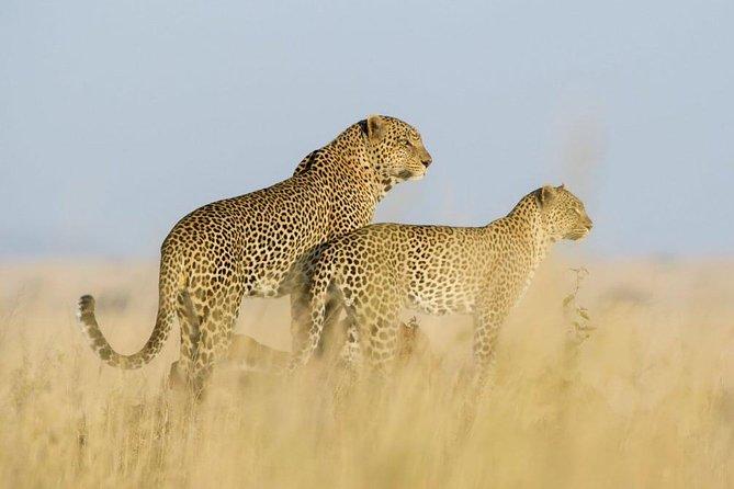 Serengeti & Ngorongoro Crater Tour | 5 Days