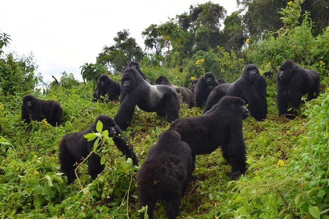7 Days Gorilla and Queen Elizabeth Park Safari