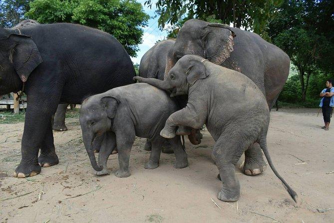 Elephant World Sanctuary with private transfer trip from Bangkok to Kanchanaburi