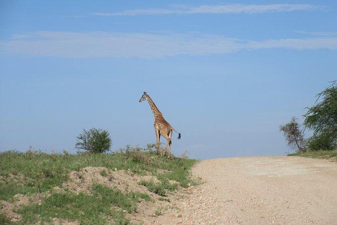 6 Days Mid -Range Big Five Safari to Tarangire Serengeti and Ngorongoro Crater.