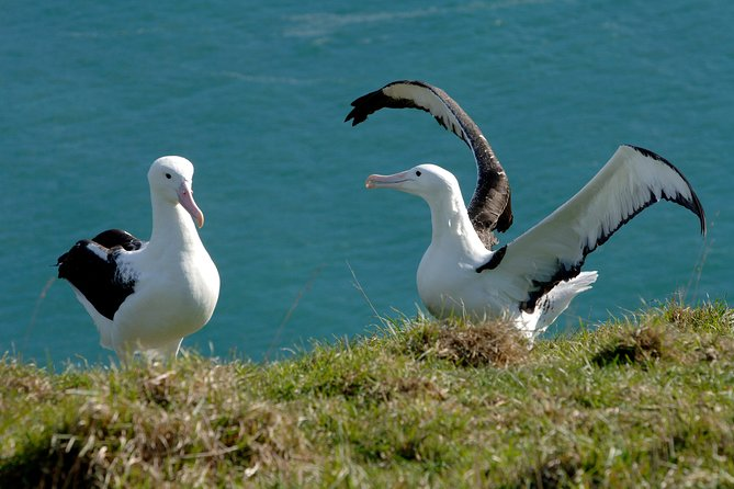 Dunedin Shore Excursion: Wildlife Cruise & Royal Albatross Centre