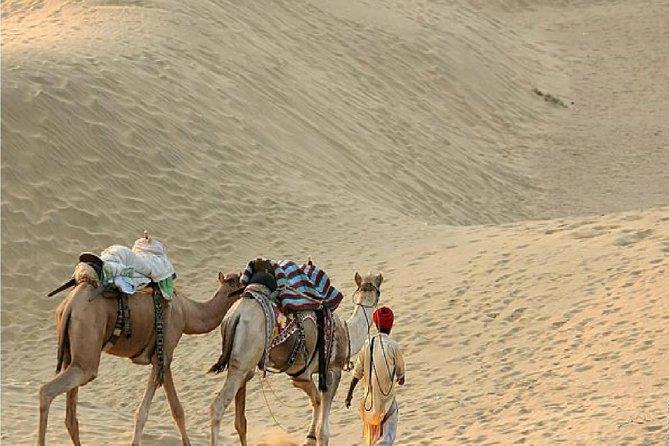02Nights & 03Days Camel Safari in Jaisalmer
