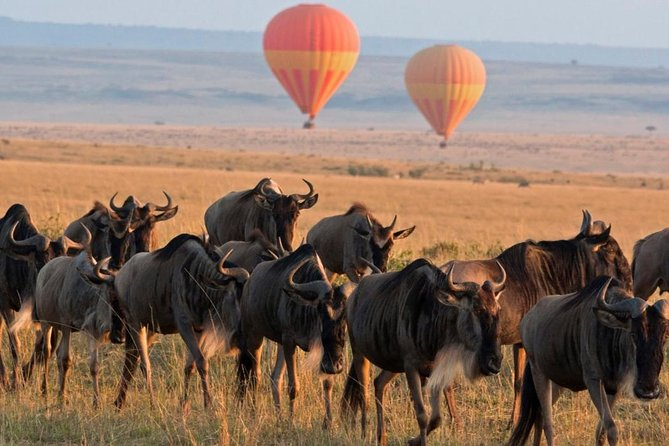 Classic Flying & Open 4X4 Masai Mara Luxury Safari