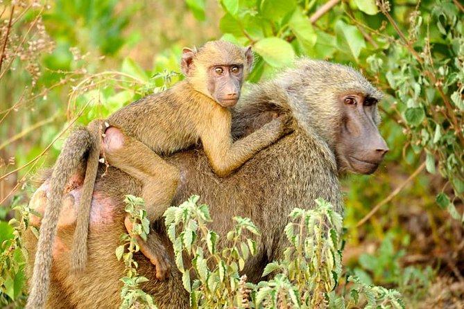 4 Days Skyway Safari to Mole National Park