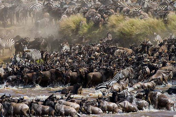 7 Days Great migration Safari to Lake Manyara, Ngorongoro Crater and Serengeti