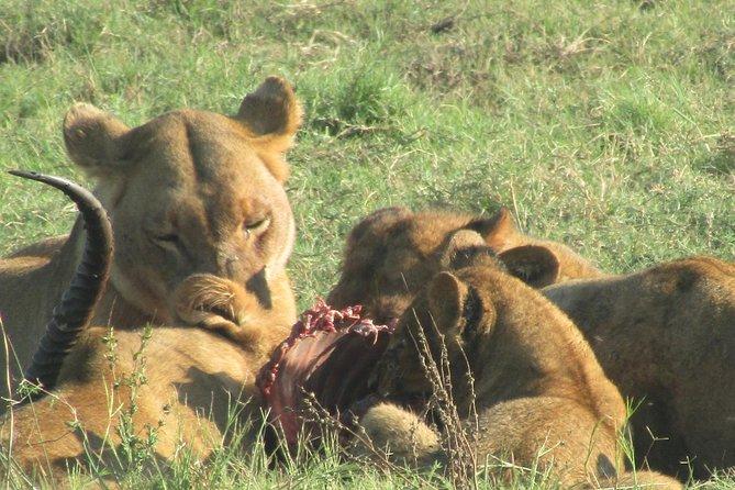 Chobe Safari Game Drive: Full Day