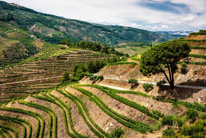 PRIVATE Full-Day Tour: Douro Valley Trip with Wine Tasting & Boat Ride