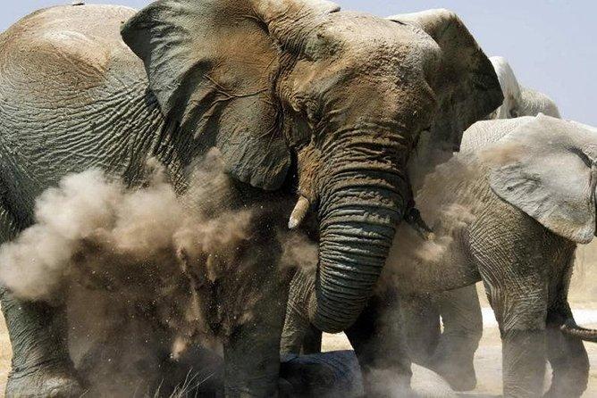 Etosha NP & Swakopmund Safari 4 Days/ 3 Nights